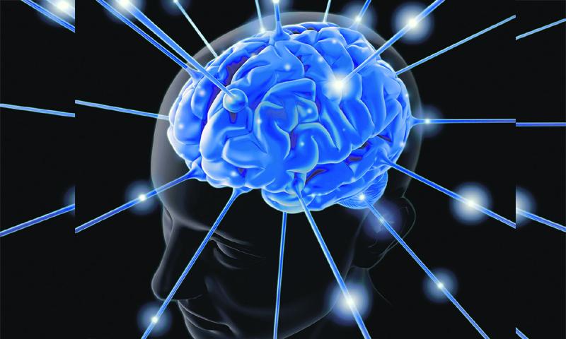 Picture of an enlightening brain.